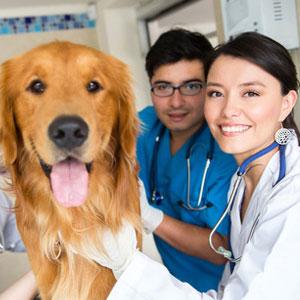 veterinario_imagen